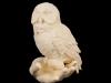 Dutton_White_Night_Owl_web