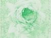 still_life_green_flower_web